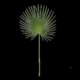 Palmenblätter H 100 cm, 3er-Pack